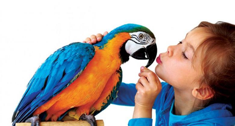 Попугай ара поет