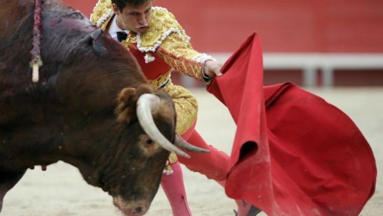 Картинки по запросу бык красный